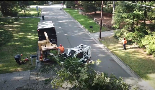tree removal in columbia mo